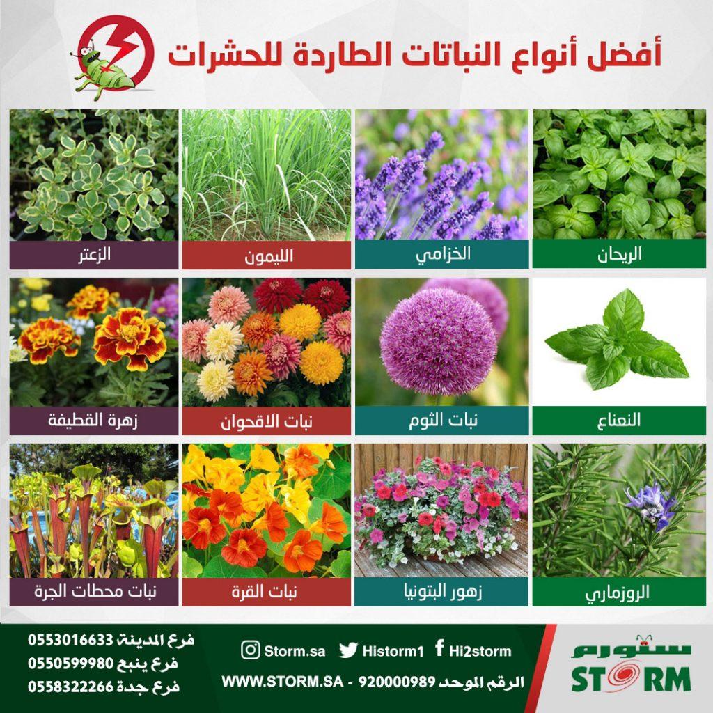 أفضل أنواع النباتات الطاردة للحشرات ستورم Storm